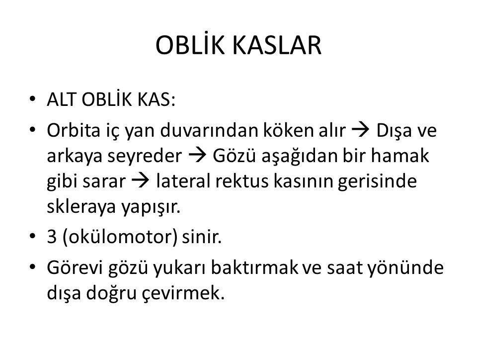 OBLİK KASLAR ALT OBLİK KAS:
