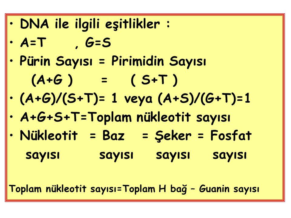 DNA ile ilgili eşitlikler : A=T , G=S Pürin Sayısı = Pirimidin Sayısı