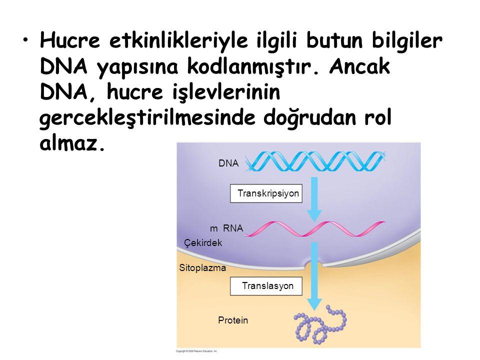 Hucre etkinlikleriyle ilgili butun bilgiler DNA yapısına kodlanmıştır