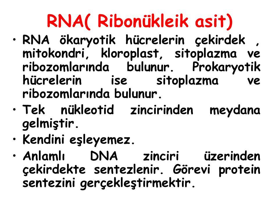 RNA( Ribonükleik asit)