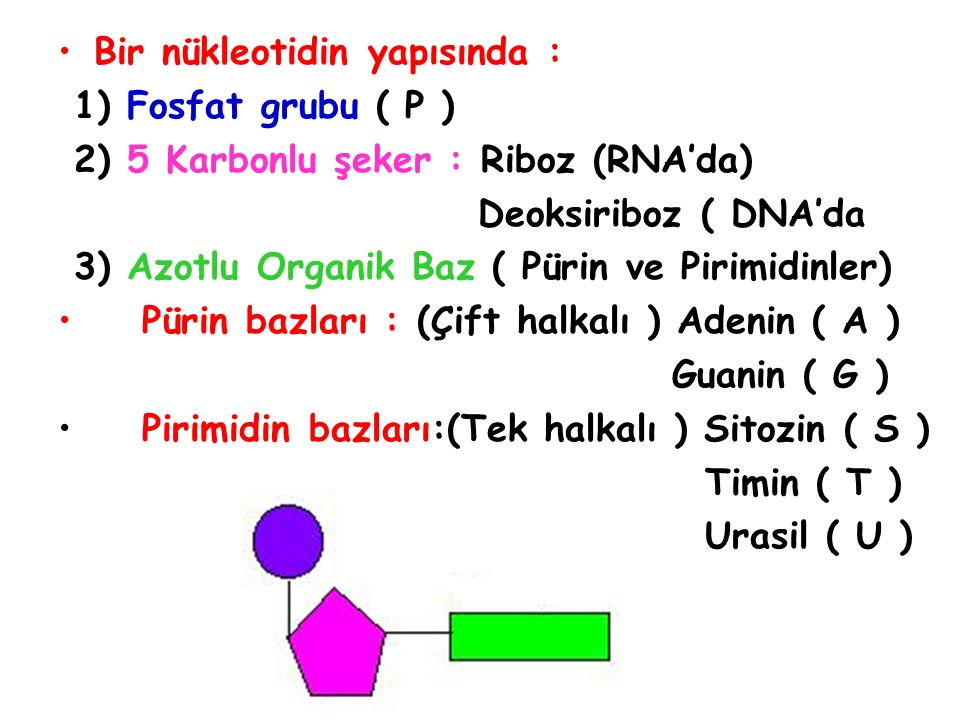 Bir nükleotidin yapısında :