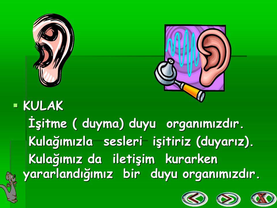 KULAK İşitme ( duyma) duyu organımızdır. Kulağımızla sesleri işitiriz (duyarız).