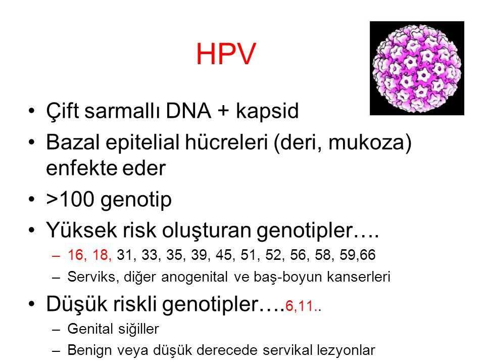 HPV Çift sarmallı DNA + kapsid