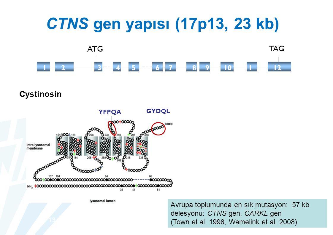 CTNS gen yapısı (17p13, 23 kb) ATG TAG Cystinosin 1 2 3c 44 5 6 7 8 9