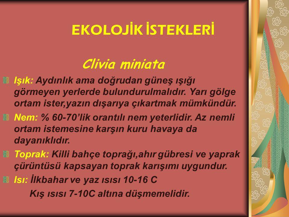 EKOLOJİK İSTEKLERİ Clivia miniata