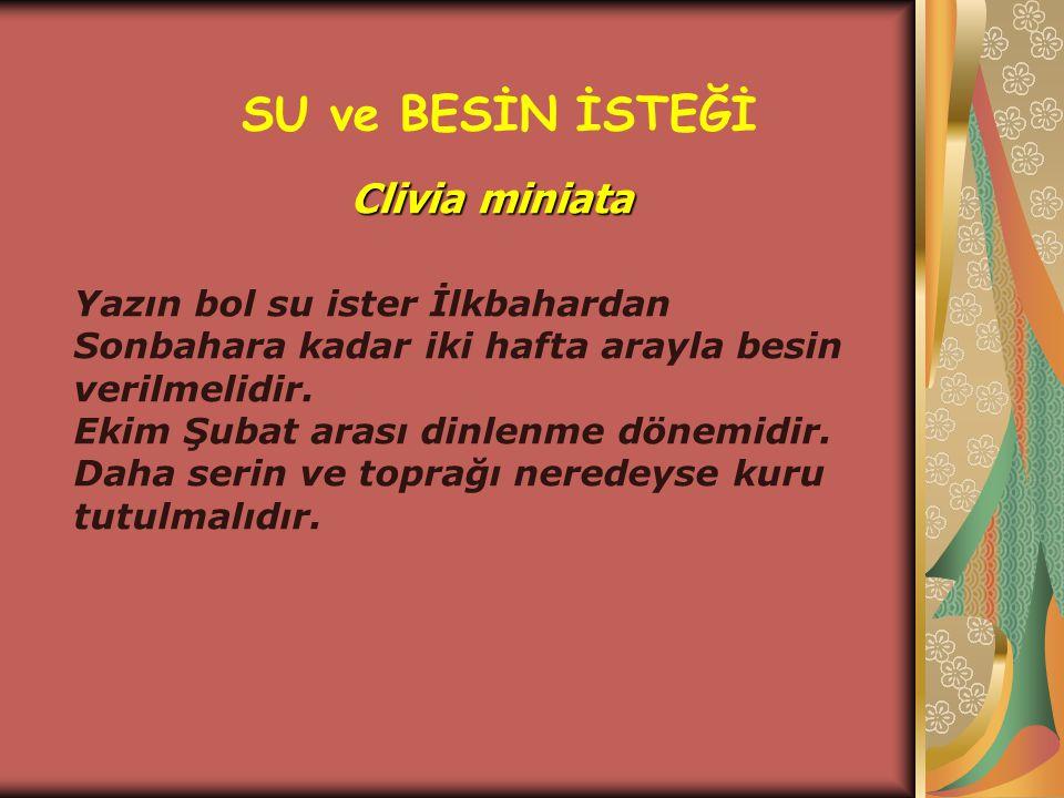 SU ve BESİN İSTEĞİ Clivia miniata