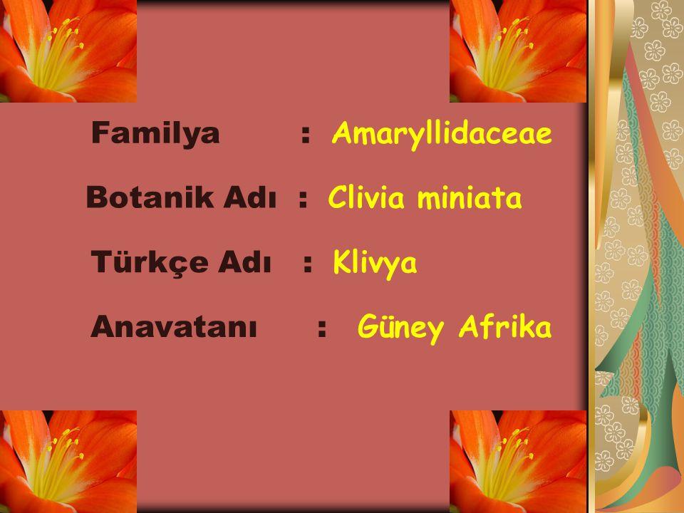 Familya : Amaryllidaceae