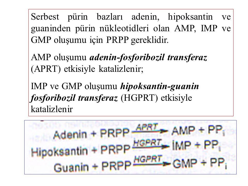 Serbest pürin bazları adenin, hipoksantin ve guaninden pürin nükleotidleri olan AMP, IMP ve GMP oluşumu için PRPP gereklidir.