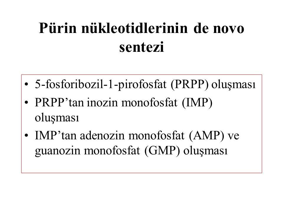 Pürin nükleotidlerinin de novo sentezi