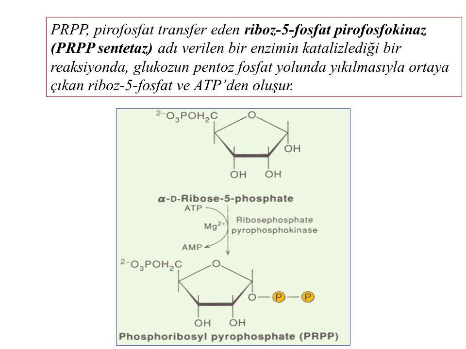 PRPP, pirofosfat transfer eden riboz-5-fosfat pirofosfokinaz (PRPP sentetaz) adı verilen bir enzimin katalizlediği bir reaksiyonda, glukozun pentoz fosfat yolunda yıkılmasıyla ortaya çıkan riboz-5-fosfat ve ATP'den oluşur.