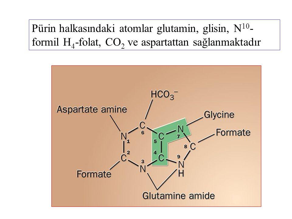 Pürin halkasındaki atomlar glutamin, glisin, N10-formil H4-folat, CO2 ve aspartattan sağlanmaktadır