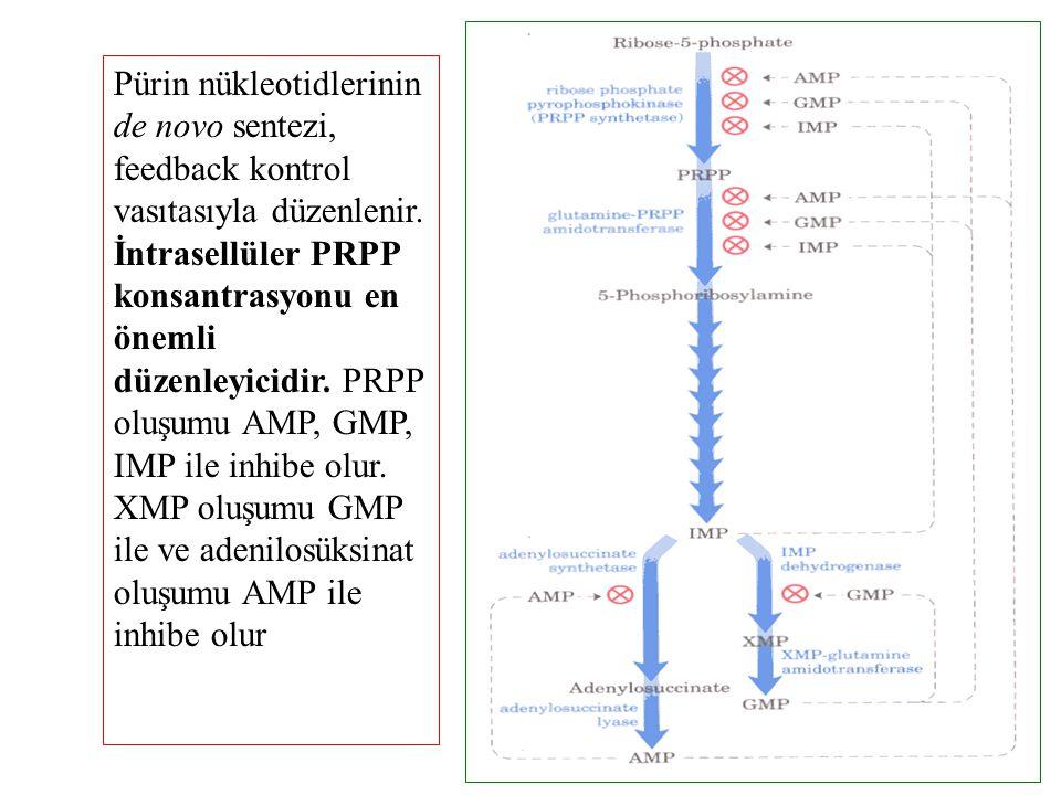 Pürin nükleotidlerinin de novo sentezi, feedback kontrol vasıtasıyla düzenlenir.