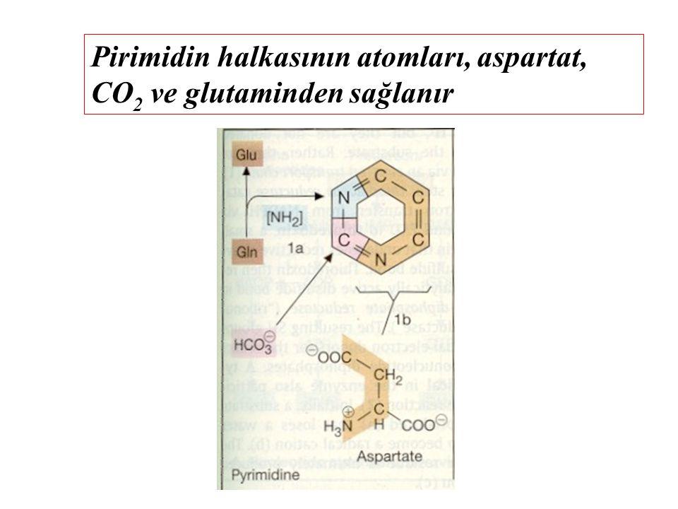 Pirimidin halkasının atomları, aspartat, CO2 ve glutaminden sağlanır