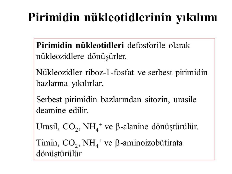 Pirimidin nükleotidlerinin yıkılımı
