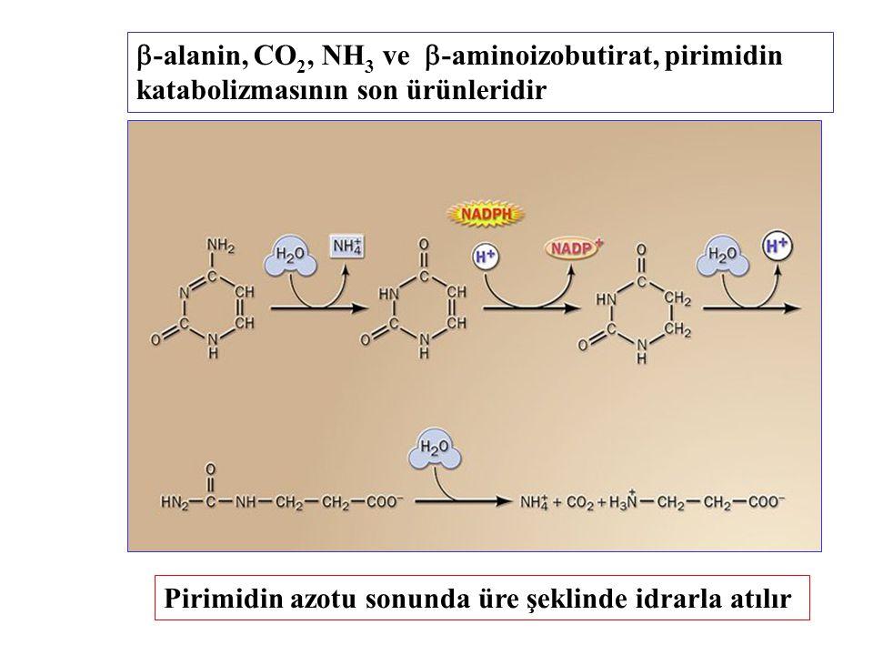 -alanin, CO2, NH3 ve -aminoizobutirat, pirimidin katabolizmasının son ürünleridir