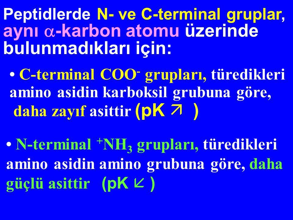Peptidlerde N- ve C-terminal gruplar, aynı -karbon atomu üzerinde bulunmadıkları için: