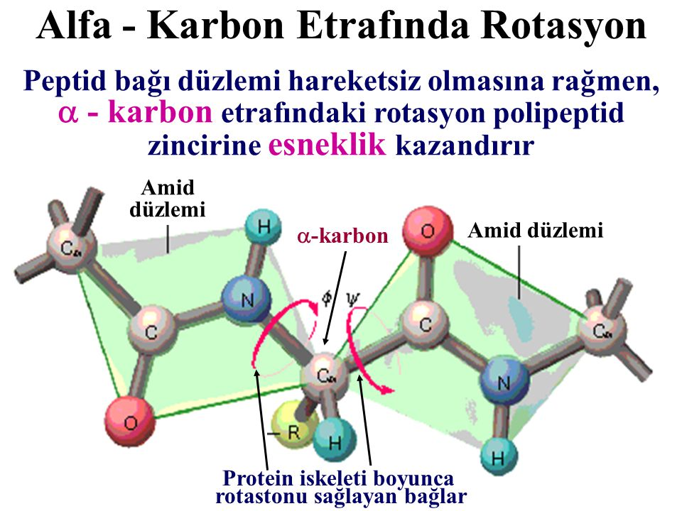 Alfa - Karbon Etrafında Rotasyon
