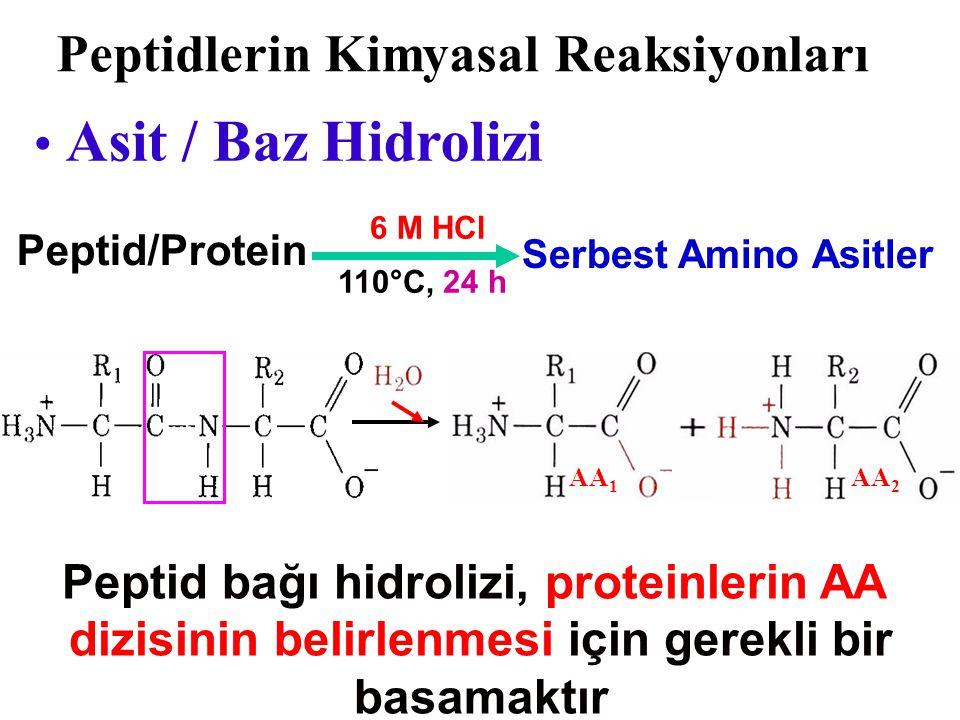 Peptidlerin Kimyasal Reaksiyonları