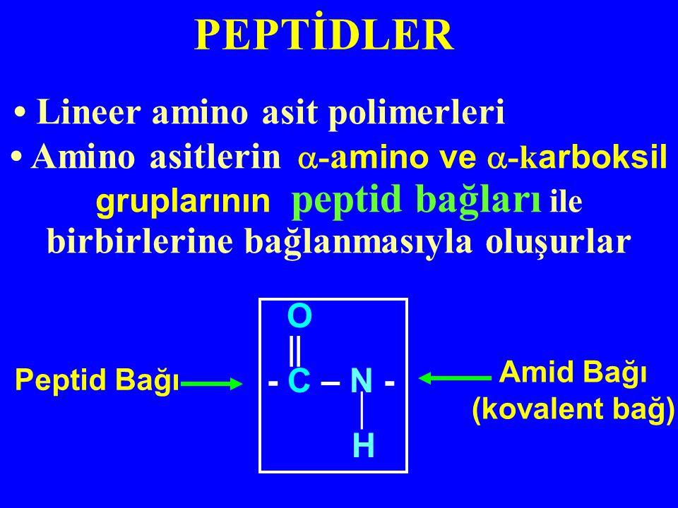 • Lineer amino asit polimerleri