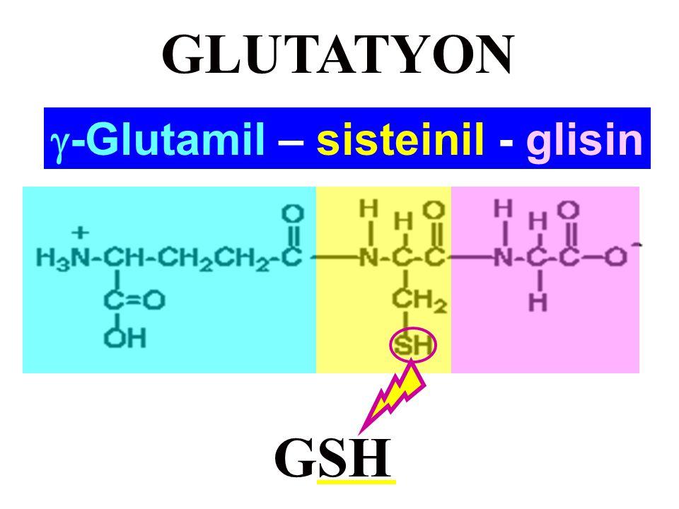 -Glutamil – sisteinil - glisin