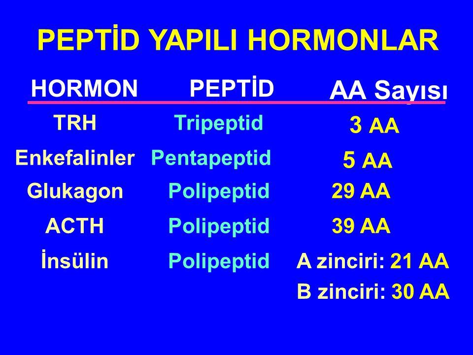 PEPTİD YAPILI HORMONLAR