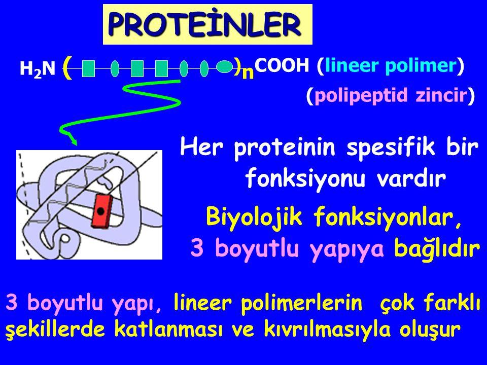 Biyolojik fonksiyonlar, 3 boyutlu yapıya bağlıdır