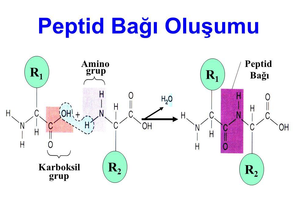 Peptid Bağı Oluşumu R1 R2 Karboksil grup Amino Peptid Bağı