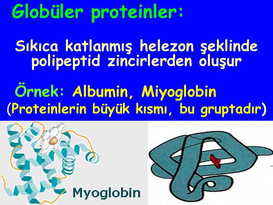 Sıkıca katlanmış helezon şeklinde polipeptid zincirlerden oluşur