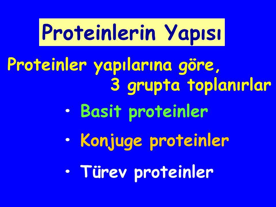 Proteinlerin Yapısı Proteinler yapılarına göre, 3 grupta toplanırlar