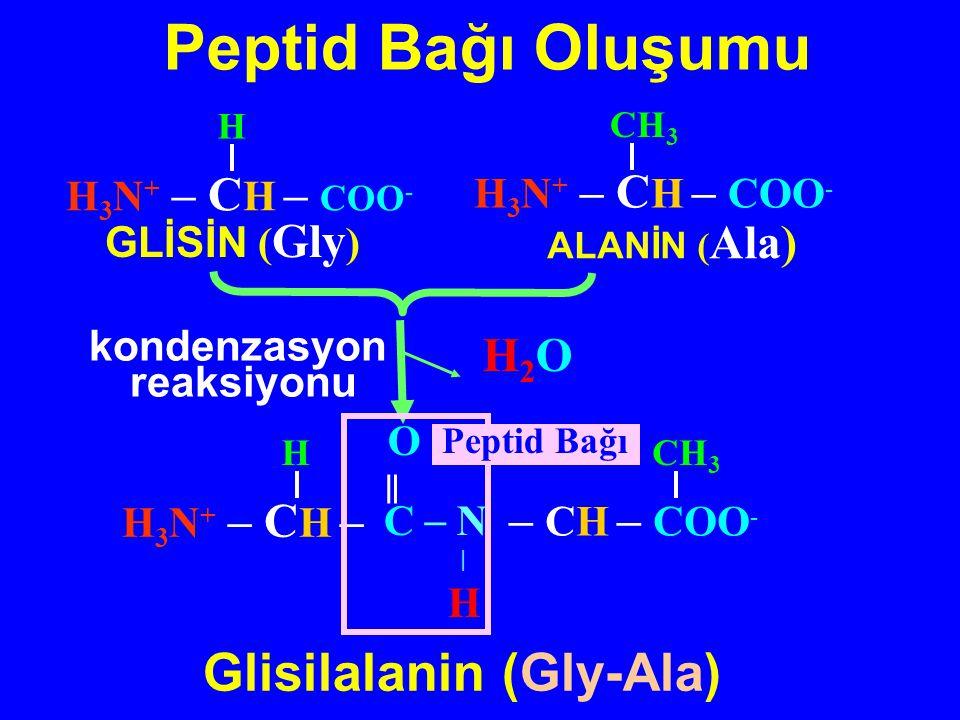 Glisilalanin (Gly-Ala)