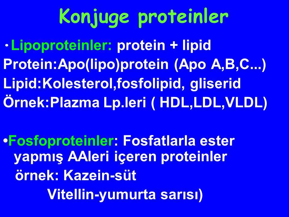 Konjuge proteinler Protein:Apo(lipo)protein (Apo A,B,C...)