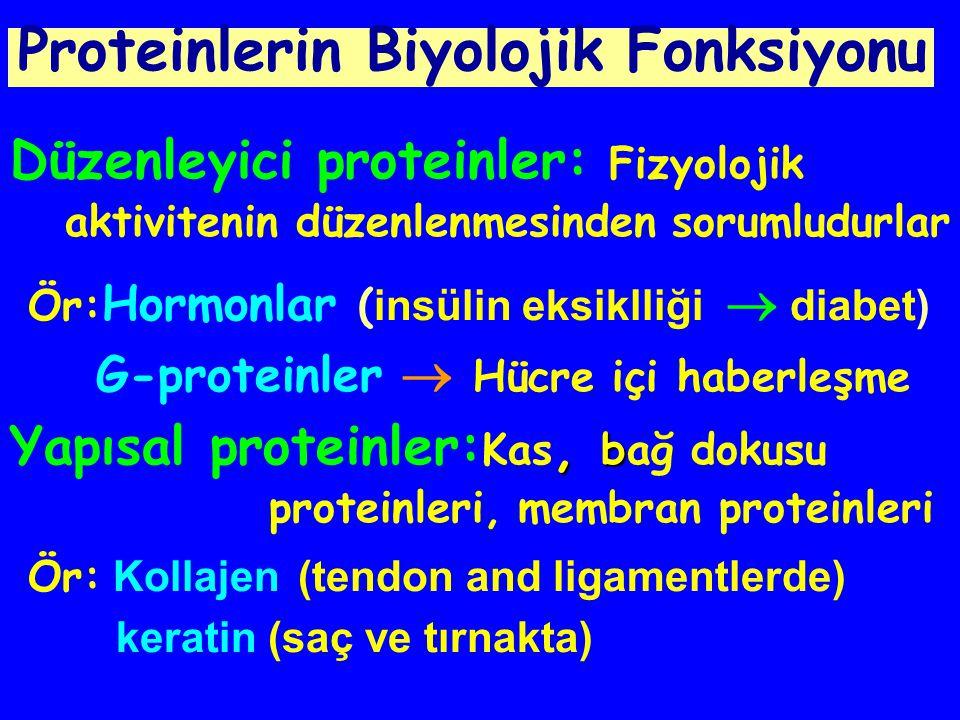 Proteinlerin Biyolojik Fonksiyonu