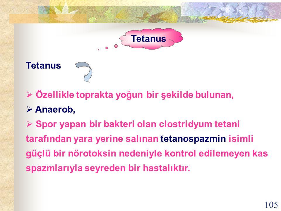 Tetanus Tetanus. Özellikle toprakta yoğun bir şekilde bulunan, Anaerob,
