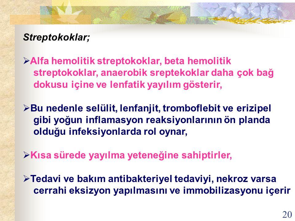 Streptokoklar; Alfa hemolitik streptokoklar, beta hemolitik. streptokoklar, anaerobik sreptekoklar daha çok bağ.