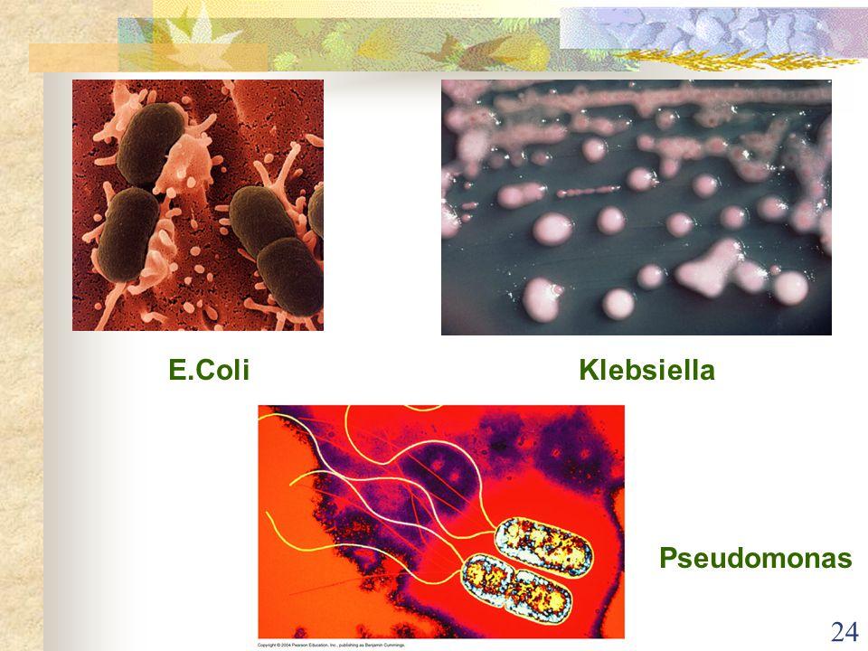 E.Coli Klebsiella Pseudomonas
