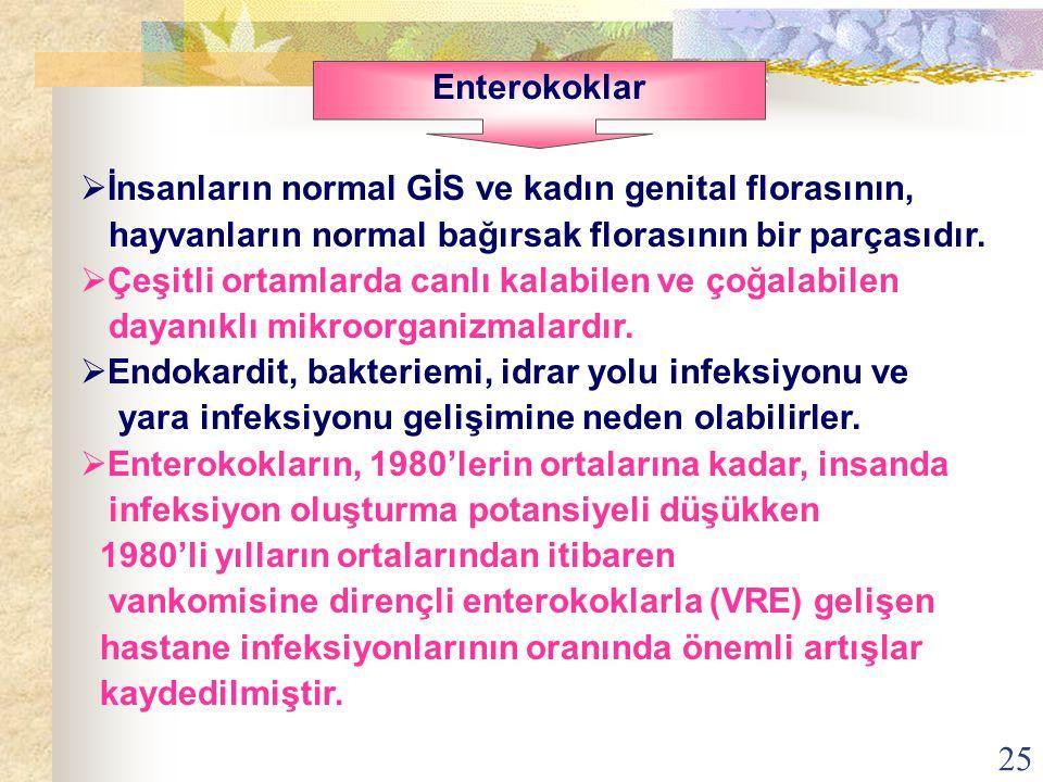 Enterokoklar İnsanların normal GİS ve kadın genital florasının, hayvanların normal bağırsak florasının bir parçasıdır.
