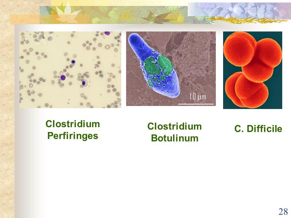 Clostridium Perfiringes Clostridium Botulinum