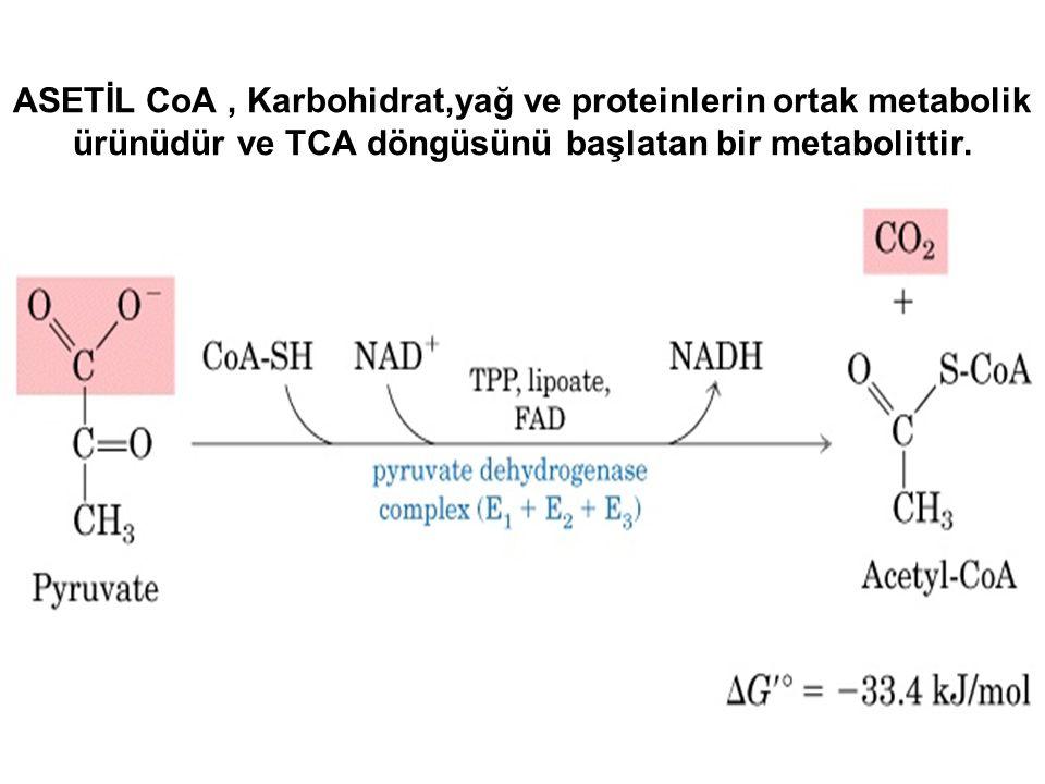 ASETİL CoA , Karbohidrat,yağ ve proteinlerin ortak metabolik ürünüdür ve TCA döngüsünü başlatan bir metabolittir.