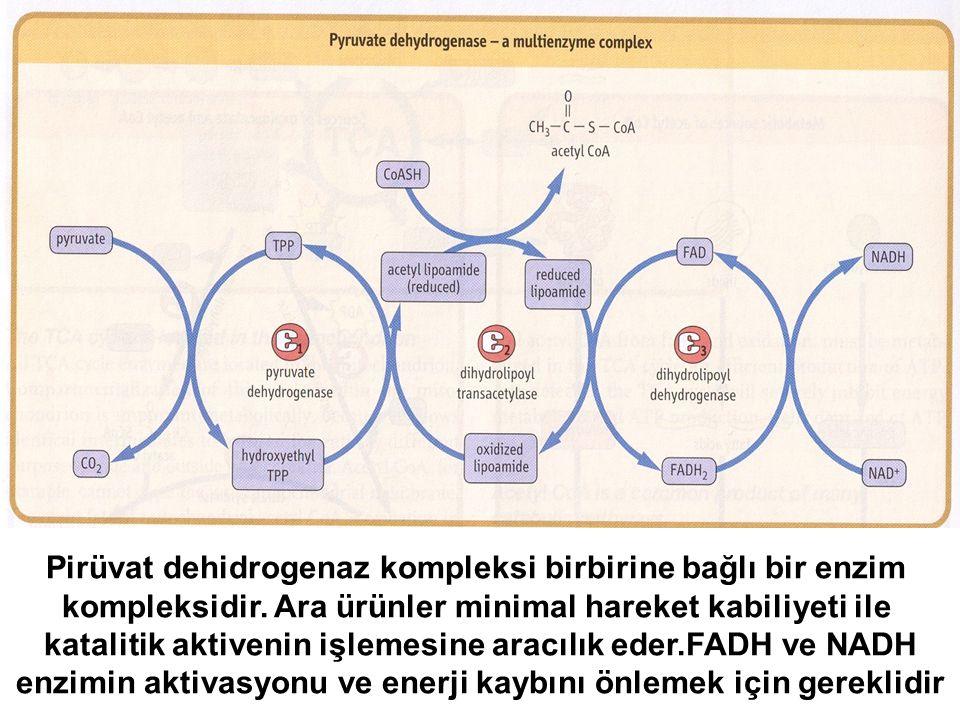 Pirüvat dehidrogenaz kompleksi birbirine bağlı bir enzim