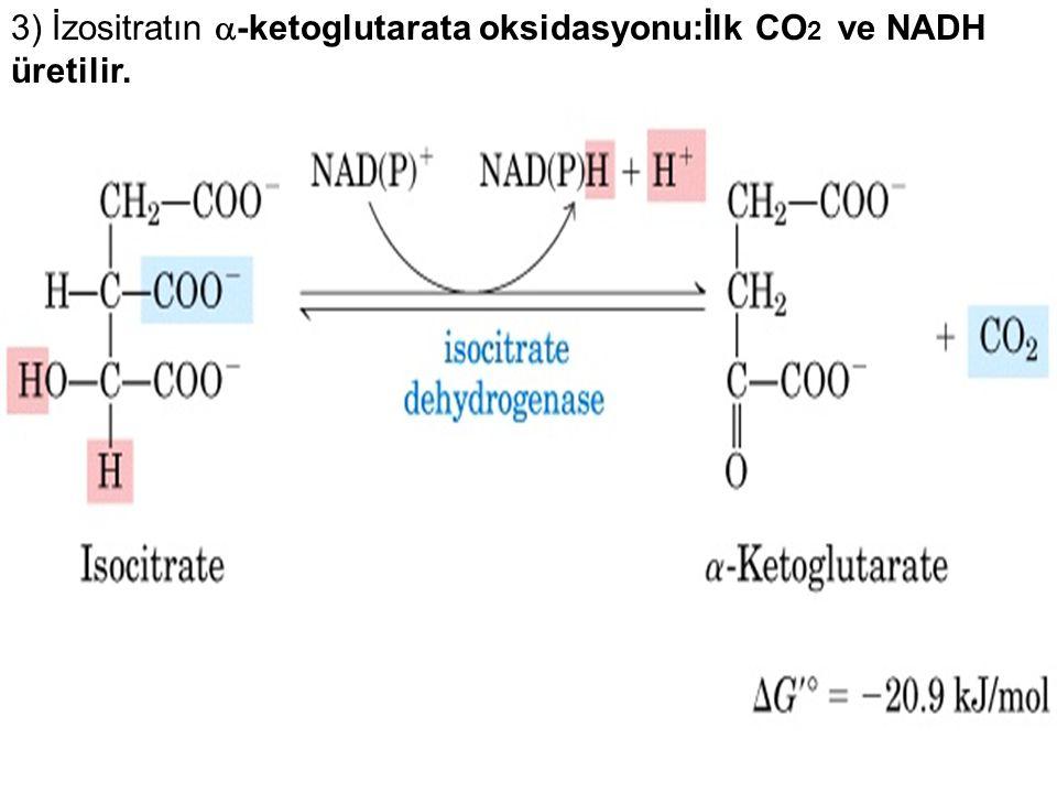 3) İzositratın -ketoglutarata oksidasyonu:İlk CO2 ve NADH üretilir.