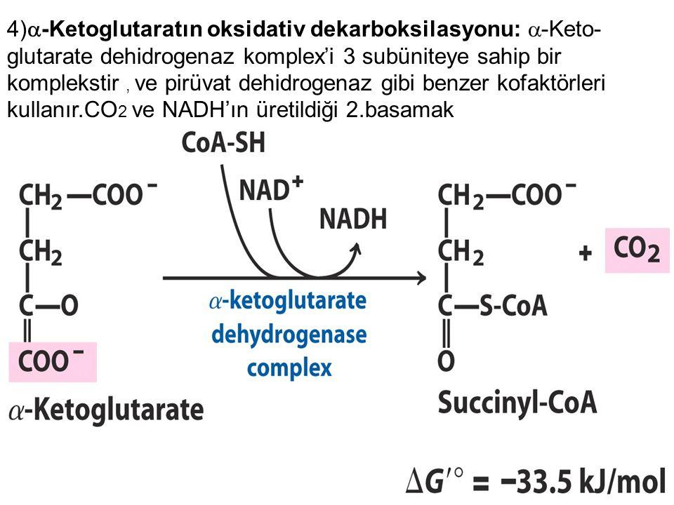 4)-Ketoglutaratın oksidativ dekarboksilasyonu: -Keto-glutarate dehidrogenaz komplex'i 3 subüniteye sahip bir komplekstir , ve pirüvat dehidrogenaz gibi benzer kofaktörleri kullanır.CO2 ve NADH'ın üretildiği 2.basamak