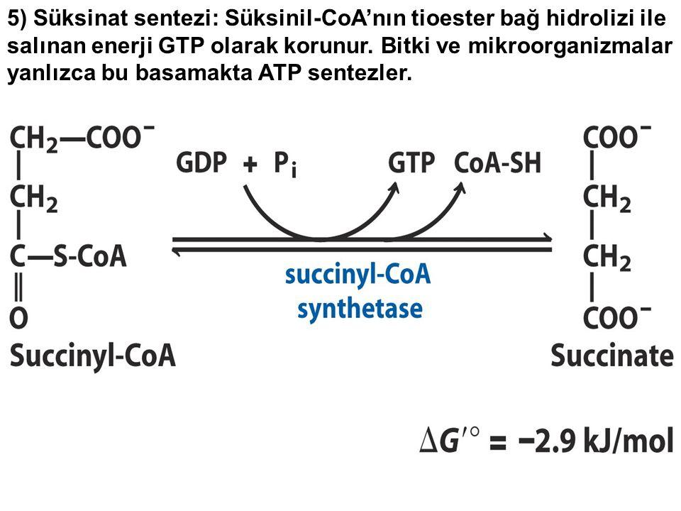 5) Süksinat sentezi: Süksinil-CoA'nın tioester bağ hidrolizi ile salınan enerji GTP olarak korunur.