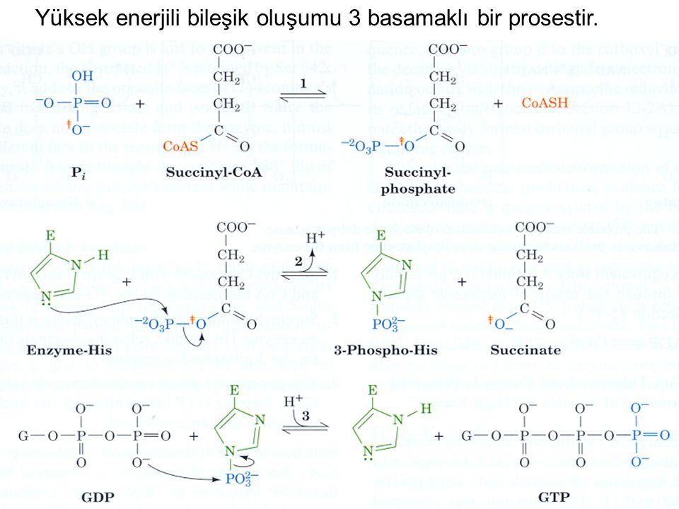 Yüksek enerjili bileşik oluşumu 3 basamaklı bir prosestir.