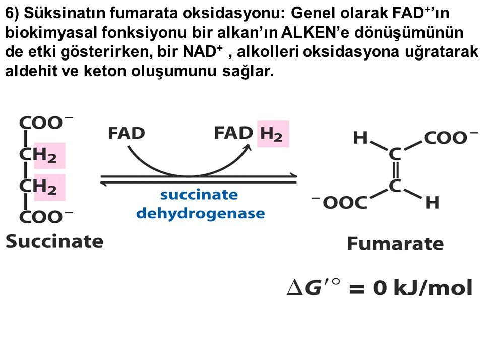 6) Süksinatın fumarata oksidasyonu: Genel olarak FAD+'ın biokimyasal fonksiyonu bir alkan'ın ALKEN'e dönüşümünün de etki gösterirken, bir NAD+ , alkolleri oksidasyona uğratarak aldehit ve keton oluşumunu sağlar.