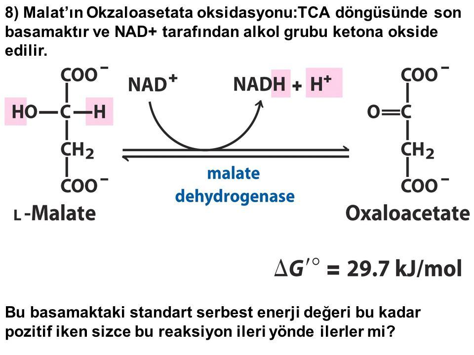 8) Malat'ın Okzaloasetata oksidasyonu:TCA döngüsünde son basamaktır ve NAD+ tarafından alkol grubu ketona okside edilir.