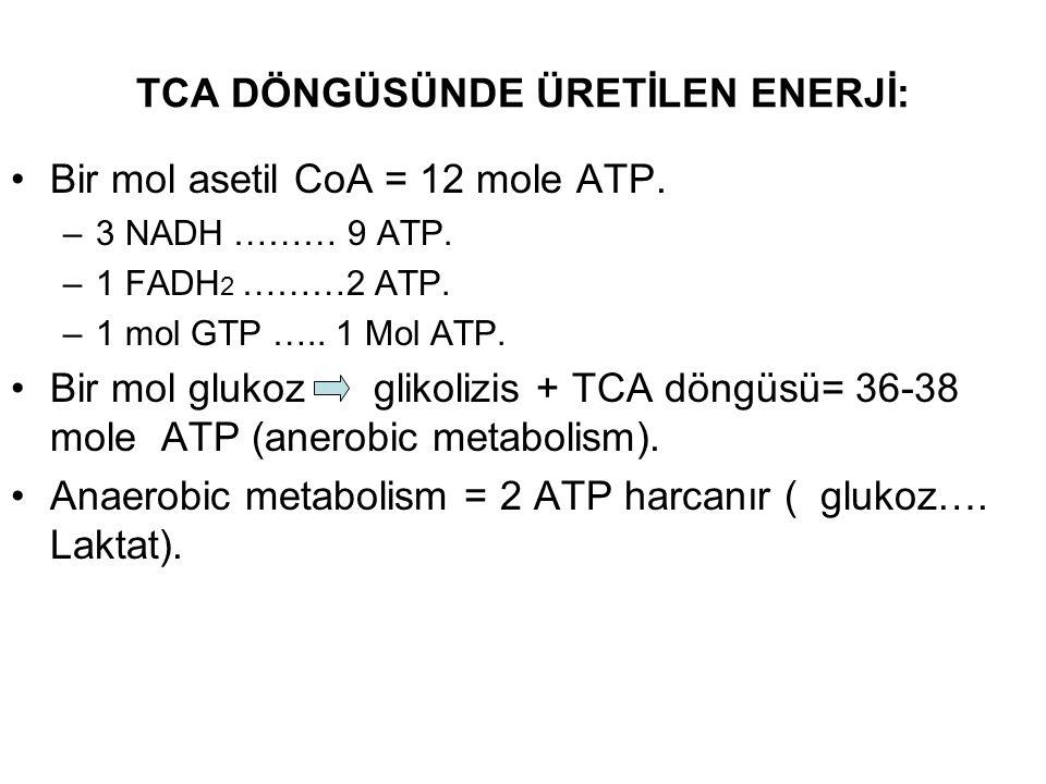TCA DÖNGÜSÜNDE ÜRETİLEN ENERJİ: