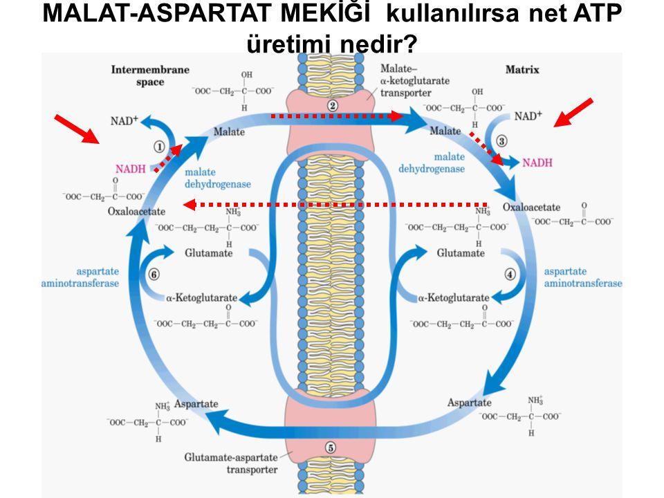 MALAT-ASPARTAT MEKİĞİ kullanılırsa net ATP üretimi nedir