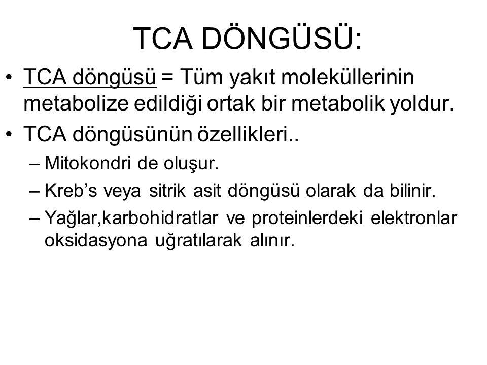 TCA DÖNGÜSÜ: TCA döngüsü = Tüm yakıt moleküllerinin metabolize edildiği ortak bir metabolik yoldur.