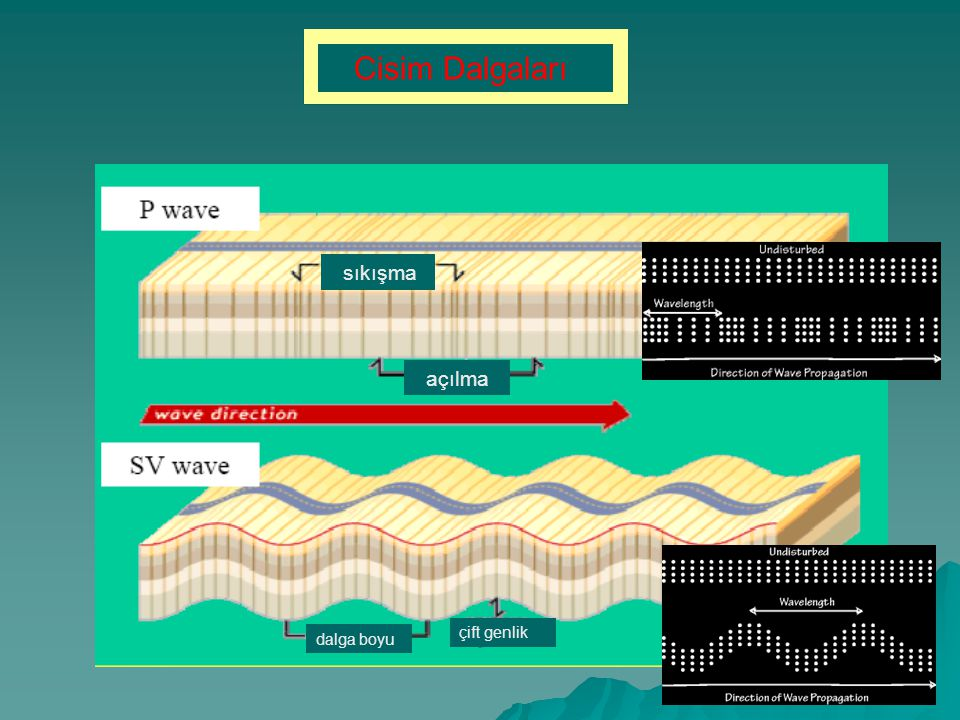 Cisim Dalgaları sıkışma açılma dalga boyu çift genlik