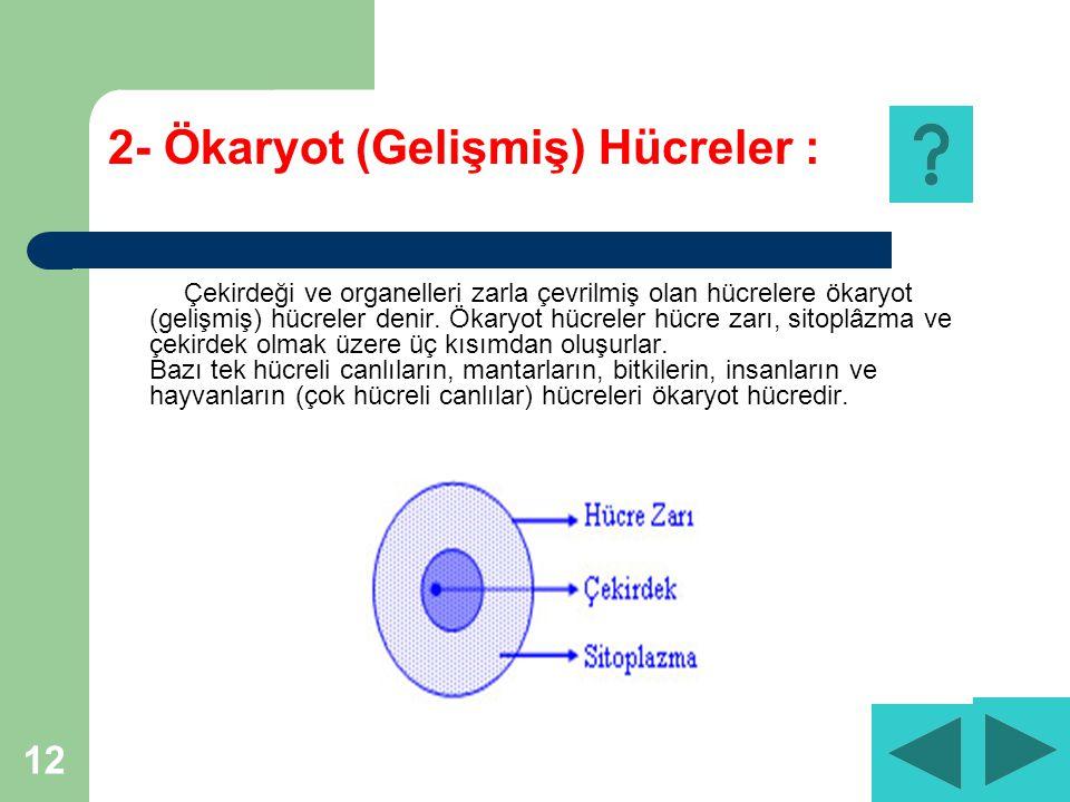 2- Ökaryot (Gelişmiş) Hücreler :